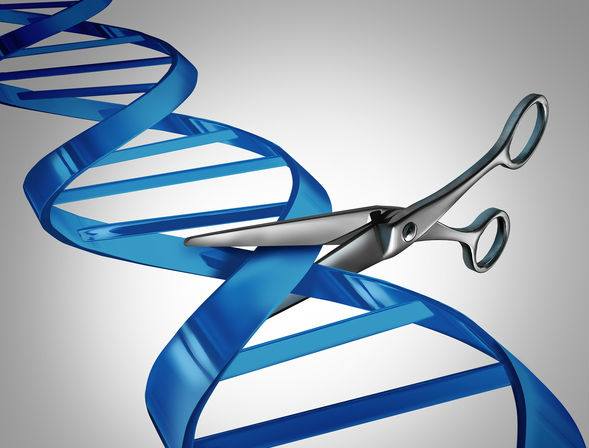 Vertex, CRISPR Therapeutics infuse first patient in CRISPR/Cas9 ...
