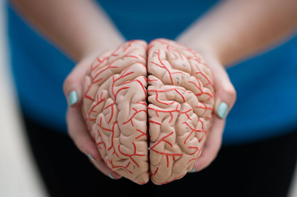 brain in hands