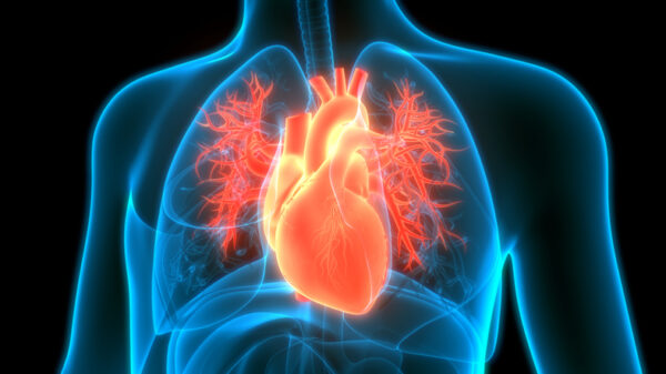 Image of heart and circulatory system