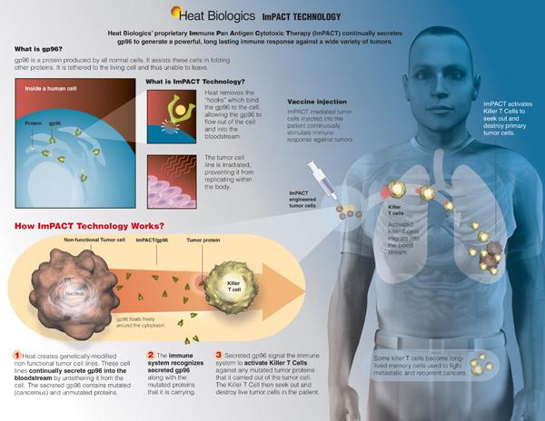 Heat Biologics News
