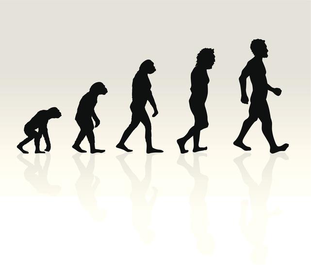 essay evolution internet