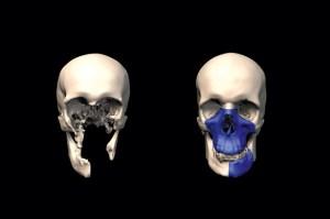 3d skull art