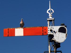 signal signals