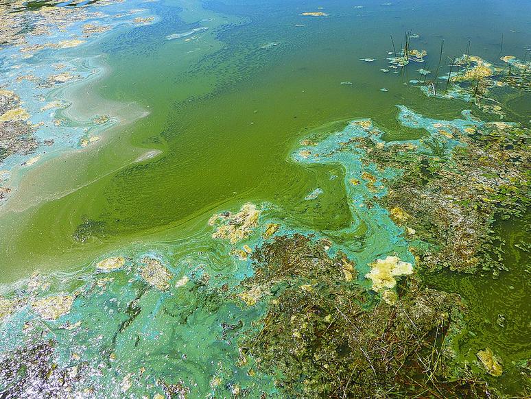 Could algae blooms cause Lou Gehrig's Disease?