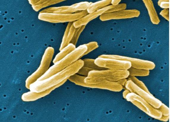 Baltimore tuberculosis patients to pilot emocha medication adherence app