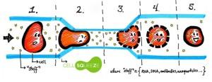 cellsqueeze2