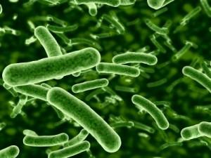 gut bacteria prebiotics
