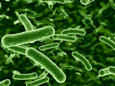 Pfizer joins the microbiome movement, enlisting Second Genome for obesity study