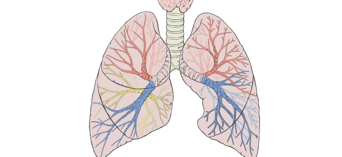 Three new devices – sealant, coils, one-way valve – may help emphysema patients