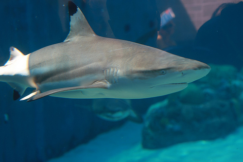 "In ""benevolent shark tank,"" life sci startups get pitch practice with angels (with sharp teeth)"
